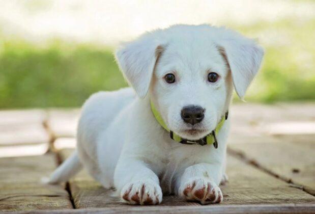 Qualitatives Bio Futter – Nur das Beste für den Hund